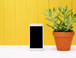 Des gadgets aident à prendre soin des plantes